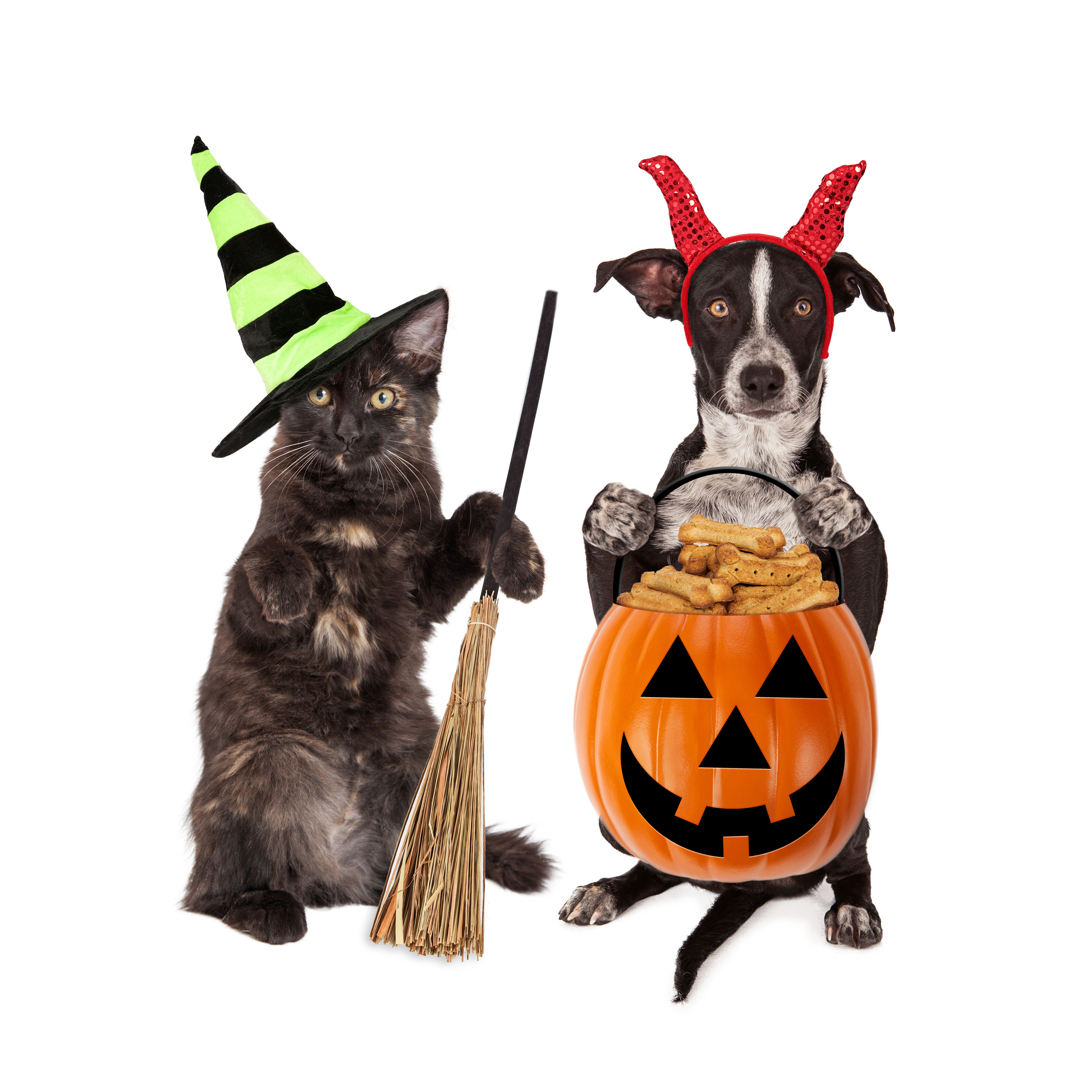 halloween costume contest   wateree animal hospital cat and dog clip art free cute cat and dog clipart